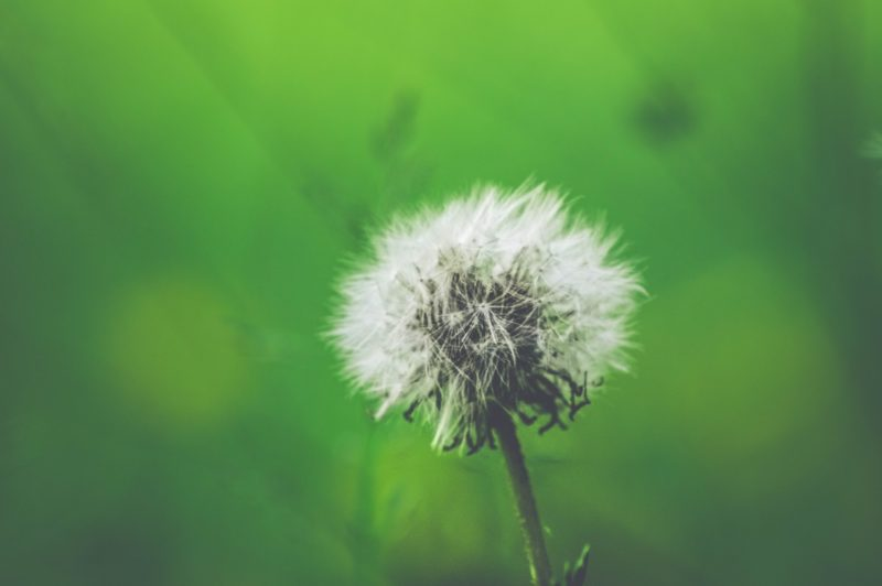 Hay fever – has yours started already?